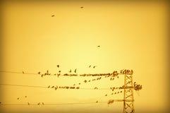 Starkstromleitungsvögel stockfotos