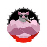 Starkt svin i exponeringsglas och med en cigarr Logo för sportklubba Fa Arkivfoto