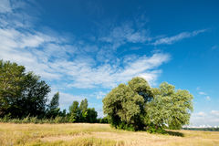 Starkt träd i fältet Fotografering för Bildbyråer