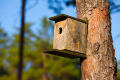 Starling房子在森林里 免版税图库摄影