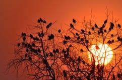 鸟分行starling的结构树 免版税图库摄影