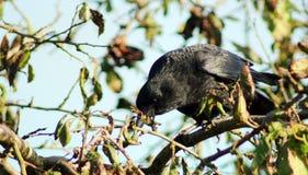 starling Stock Fotografie