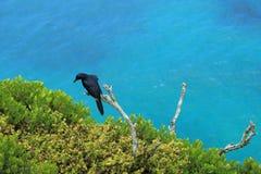 Starling ad ali rosse Fotografie Stock