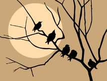 Starling auf Baum Lizenzfreie Abbildung