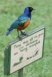 Starling Bird on Funny Sign Stock Photos