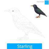 Starling bird learn to draw vector Stock Images