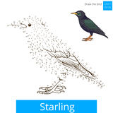 Starling bird learn to draw vector Royalty Free Stock Photography