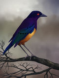 Starling On A Branch - Digital Painting. Digital painting of a colorful starling bird perched on a branch Stock Images