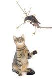 Starling en kat Stock Foto