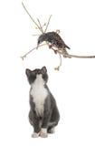 Starling en kat Royalty-vrije Stock Fotografie