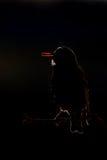 Starling europeo nel contralight Immagine Stock Libera da Diritti