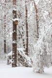 Starling-Haus auf einem Baum im Wald im Winter Lizenzfreie Stockfotografie