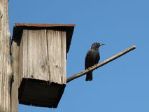 Starling-house Stock Photos