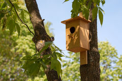 Starling-house. Bird house on a tree in spring Stock Photography
