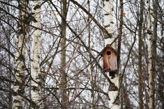 A starling-house in the forest stock photography