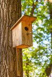 Starling house on pine tree Stock Image