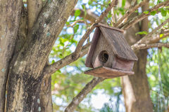 Starling house on tree in autumn park Stock Photography