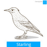 Starling learn birds coloring book vector Royalty Free Stock Image