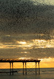 Starling Menge über Aberystwyth-Pier Lizenzfreie Stockfotografie