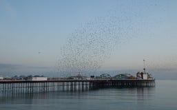 Starling Murmuration au-dessus de Brighton Pier photo libre de droits