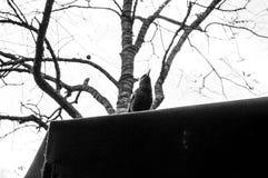 Starling op het dak Stock Afbeeldingen