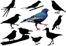 Starling and other birds. Illustration with different small birds collection Stock Photo