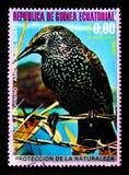 Starling Sturnus vulgaris, serie nordamericano degli uccelli, circa 1976 Fotografia Stock