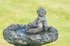Starling [Sturnus vulgaris] taking a  bird bath. Starling [sturnus vulgaris] taking a bird bath, Taken in a garden on the south of England Royalty Free Stock Photos