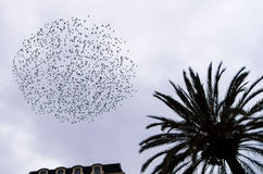 Starling in urban context Royalty Free Stock Images