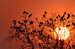 Starling Vogel auf dem Zweig des Baums Lizenzfreie Stockfotografie