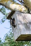 Starling zit dichtbij het vogelhuis Stock Afbeeldingen