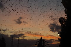 Starlings Stock Fotografie