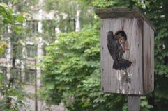 starlings Стоковое Изображение