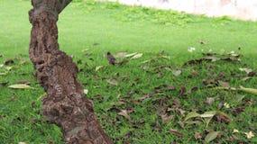 starlings image libre de droits