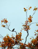 starlings Стоковая Фотография RF