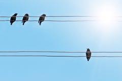 starlings Стоковая Фотография