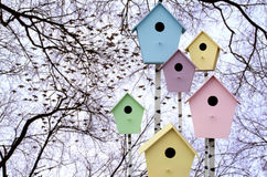 Starlings arrive. Colorful birdhouses. On a background of tree branches Royalty Free Stock Images