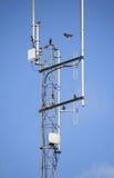 Starlings en Geavanceerd technische Antennes royalty-vrije stock fotografie