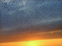 Starlings en vol Images stock