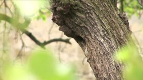 Starlings stock video
