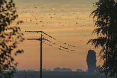 Starlings resting on a wire Royalty Free Stock Images