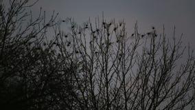 Starlings zit op een boom en vliegt dan weg stock videobeelden