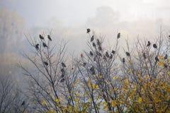 Starlingsvogels die op de boom in de ochtend zitten stock fotografie