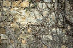 starożytna ściany fotografia royalty free