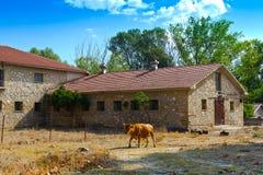 starożytne stworzenia farmy mleczarskim krajowych tradycji pracują w szczególności turystów Fotografia Stock