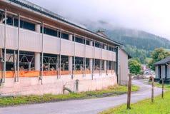 starożytne stworzenia farmy mleczarskim krajowych tradycji pracują w szczególności turystów Fotografia Royalty Free
