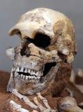 starożytna ludzkiej czaszki Zdjęcia Royalty Free