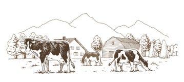 staro?ytne stworzenia farmy mleczarskim krajowych tradycji pracuj? w szczeg?lno?ci turyst?w Krowy pasaj? w ??ce Wiejski krajobraz ilustracji