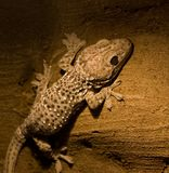 starożytny reptile Zdjęcia Stock