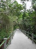 Starr Thomas Memorial Boardwalk a Bailey Homestead Preserve fotografia stock libera da diritti